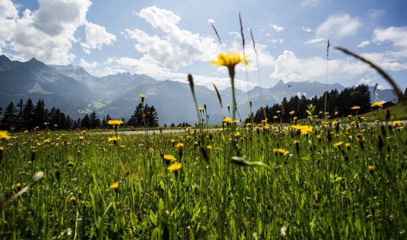 Blumen- & Kräuterwanderung Valleu