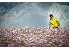Sherpa - campz.de